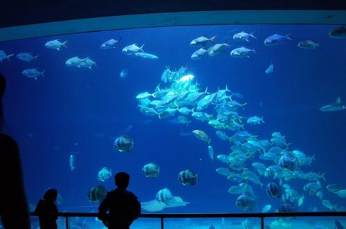 和海洋生物亲密接触